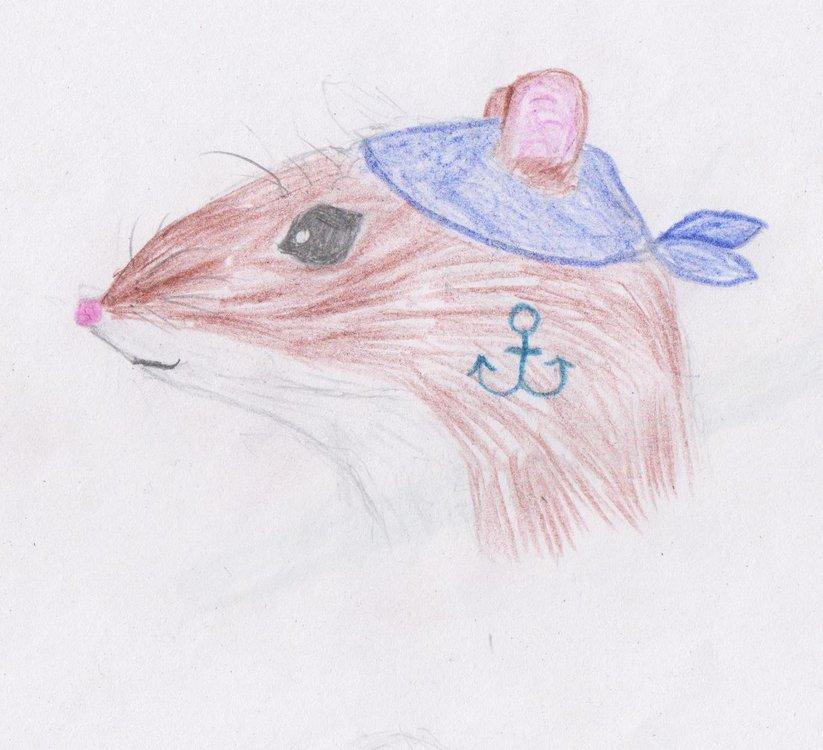 Крыса-пират