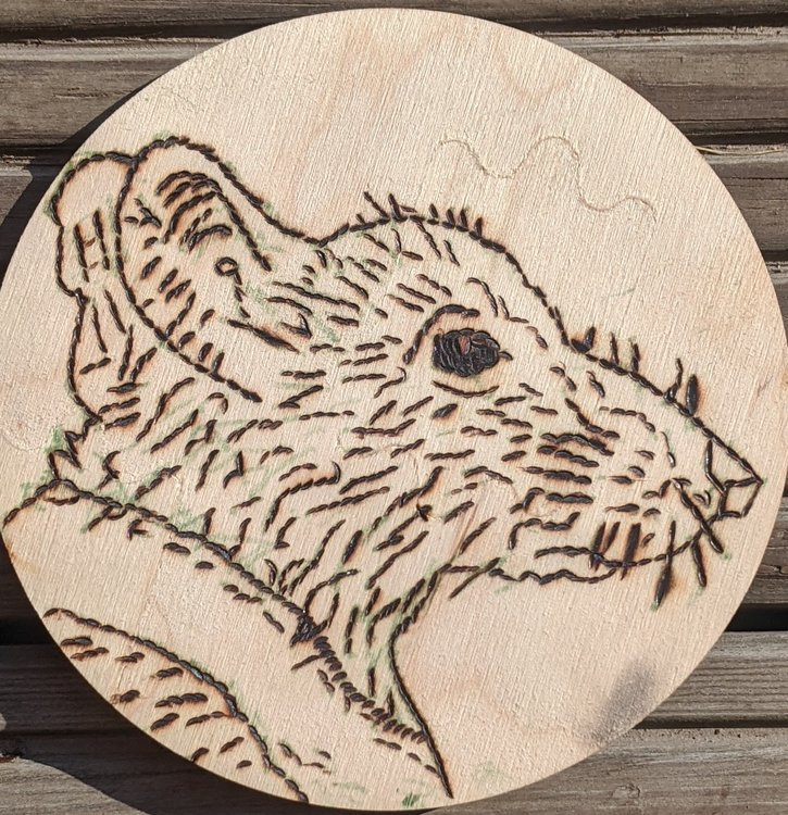 Портрет крысы Солнцехвоста