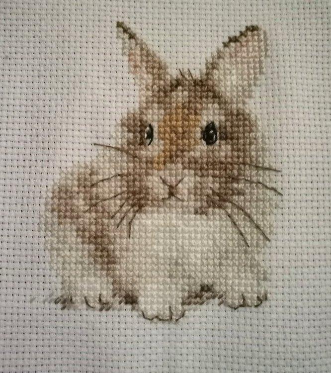 Алиса - Крольчонок