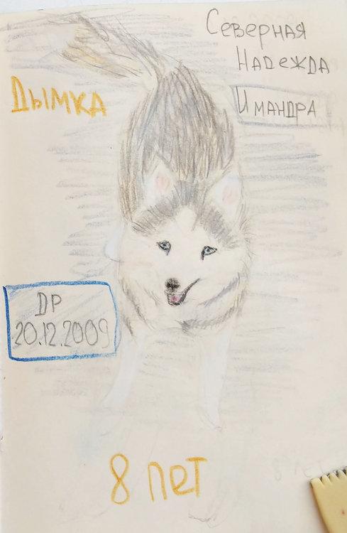 Дымка - 8 лет
